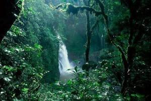 Bosques-amazónicos-colombianos-300x201