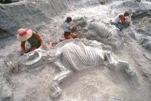 Animal-Pompeii