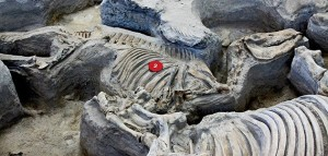 ob_c81301_evotourism-ashfall-fossil-beds-state-h