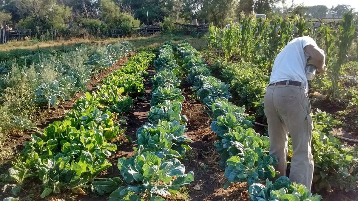 Soberanía alimentaria implica decidir¨que sembrar?