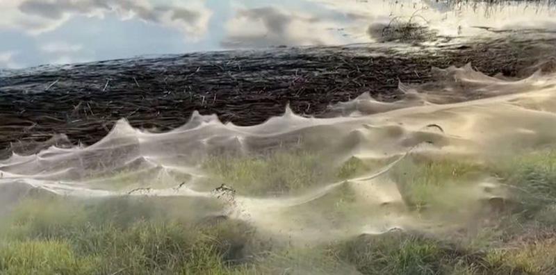 Lago de Australia cubierto de telarañas