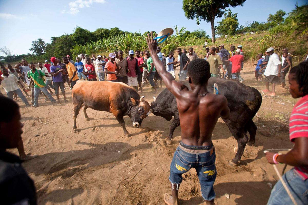 Pelea de Toros en Haití