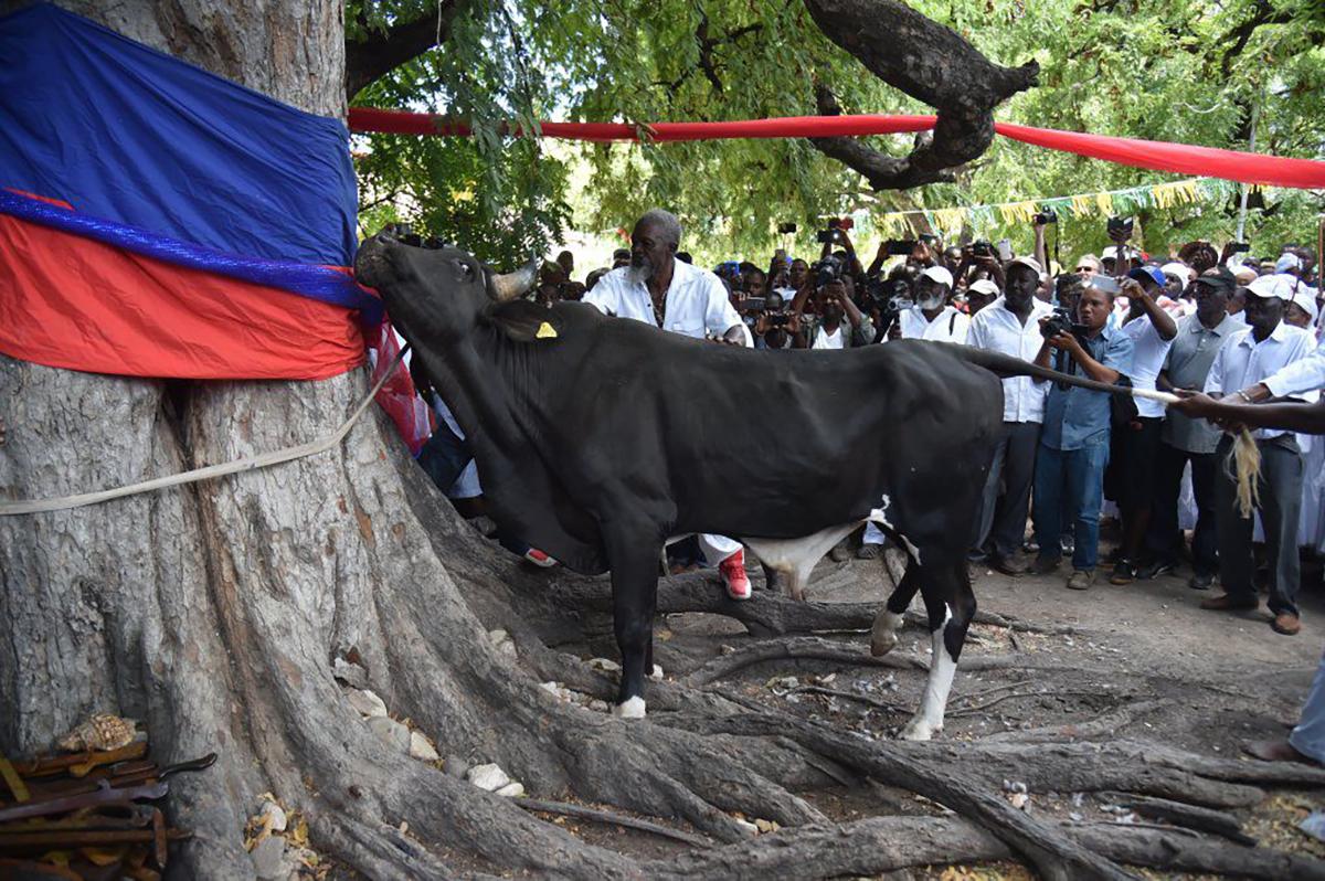 """Haití y su poco conocida con sus aficiones a asuntos """"de Toros""""."""