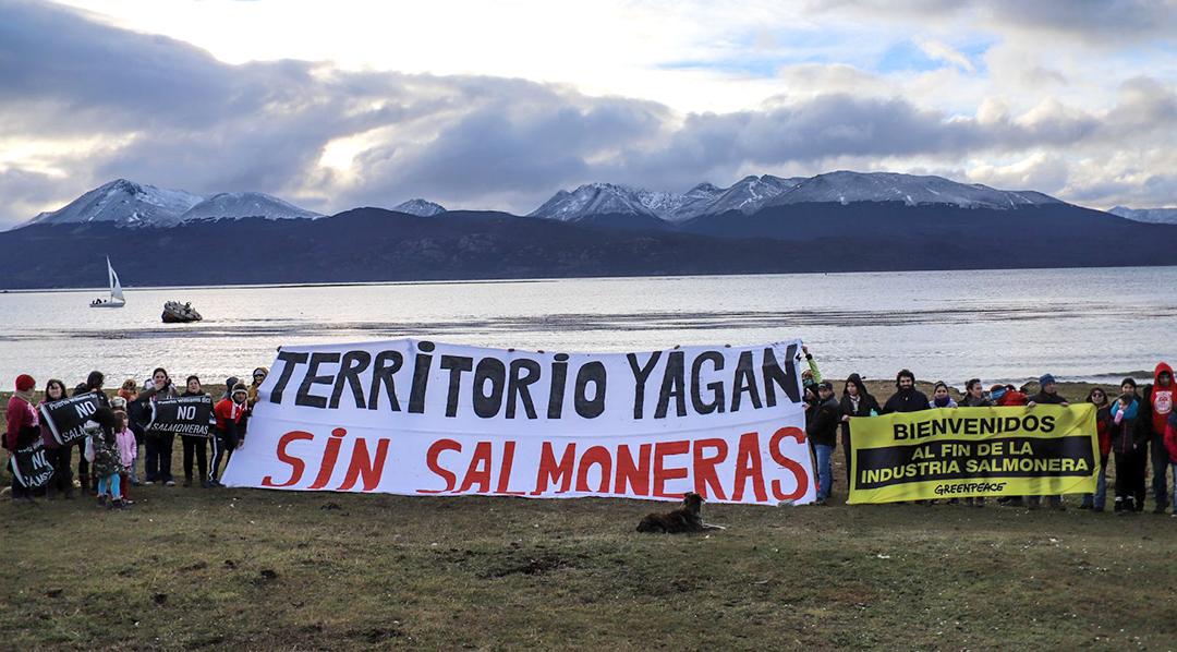 En solo tres años, se pasó de un esquema de incentivos estatales para la instalación de  producción de salmón de cultivo en Tierra del Fuego a la prohibición total.