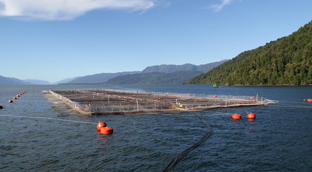 El ejemplo más cercano de esta actividad productiva está en Chile, país que exporta su producción de salmón de criadero por un monto de alrededor de 5000 millones de dólares anuales.
