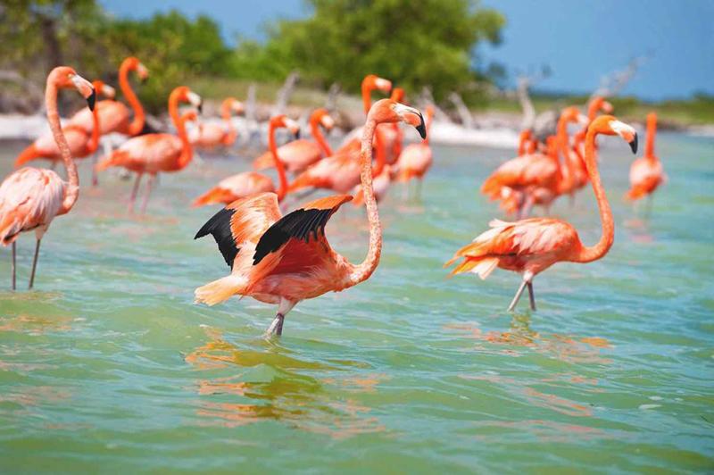Foto: Cortesía de la Secretaría de Fomento Turístico de Yucatán