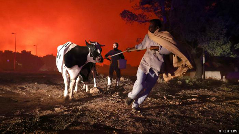 Habitantes del norte de Atenas intentan evacuar a su ganado ante los incendios.
